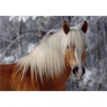 Magic horse tete cheval 239P
