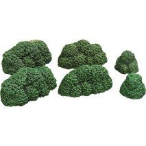 Bushes Verdant Green